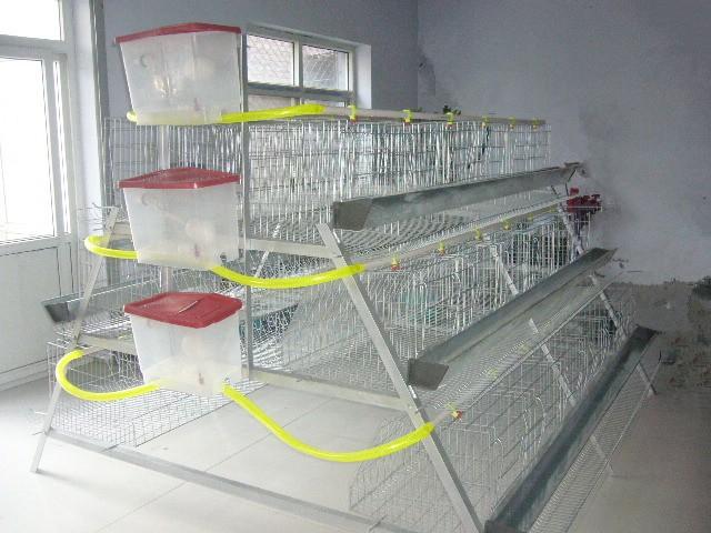 Клетки для кур несушек на 96 штук